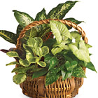 Emerald Garden Planter Basket