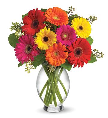1-800-FLORALS coupon: Teleflora® Gerbera Brights Bouquet