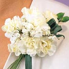 White Mini Carnations Corsage