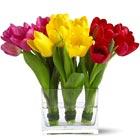 Tulip Cluster Trio