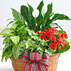 Merry and Bright Holiday Dish Garden