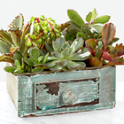 Perfect Vision Succulent Windowbox