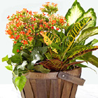 Harvest Delight Planter Basket
