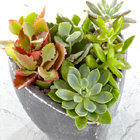 Spread the Love Succulent Garden
