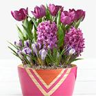 Fragrant Purple Bulb Garden