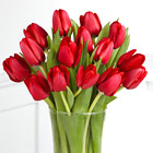 Red Carpet Ready Tulip Bouquet with Vase