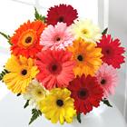 Colorful World Gerbera Daisy Bouquet