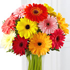 Colorful World Gerbera Daisies with Vase