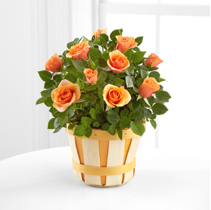 - Fall Fabulous Mini Rose Plant