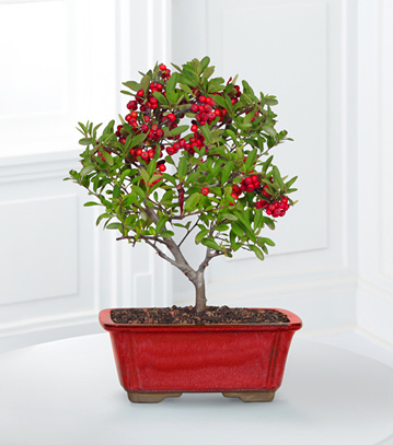 - Berry Bright Holiday Bonsai