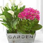 FTD® Sunlit Simplicity Dish Garden