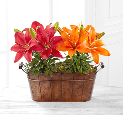 - FTD� Colors of Autumn Lily Plant Duo