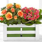 FTD� Spring Surprises Plant Due