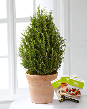 - FTD� Rosemary Riches Tree