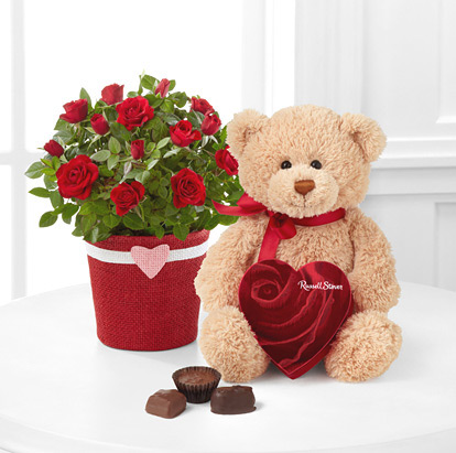 - Romantic Intentions Mini Rose, Chocolates & Bear