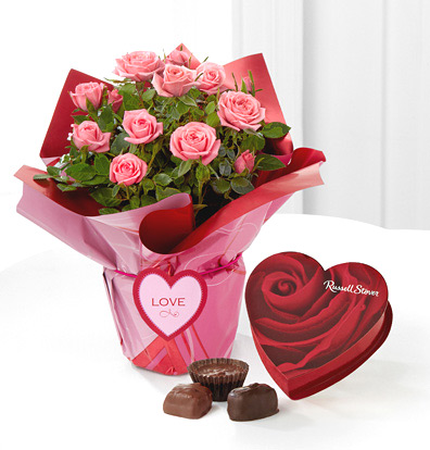 - Heart's Connection Mini Rose Plant & Chocolates