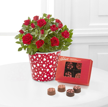 - Love's Treasures Valentines Mini Rose with Chocolates