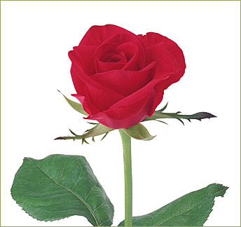 Red Rose Virtual eGift